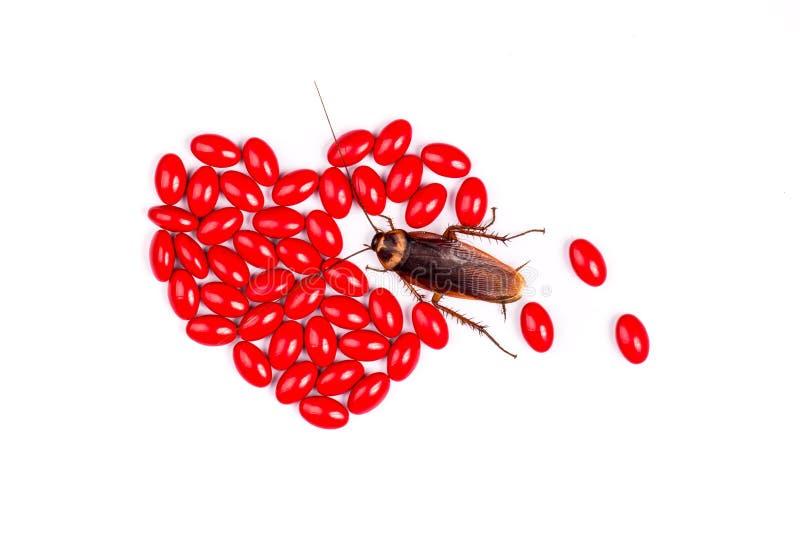 Drog med kackerlackan arkivbild