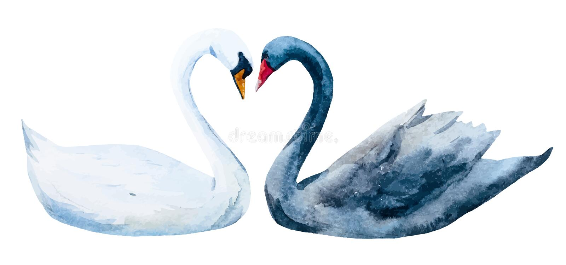 Drog svanar för vattenfärg hand vektor illustrationer