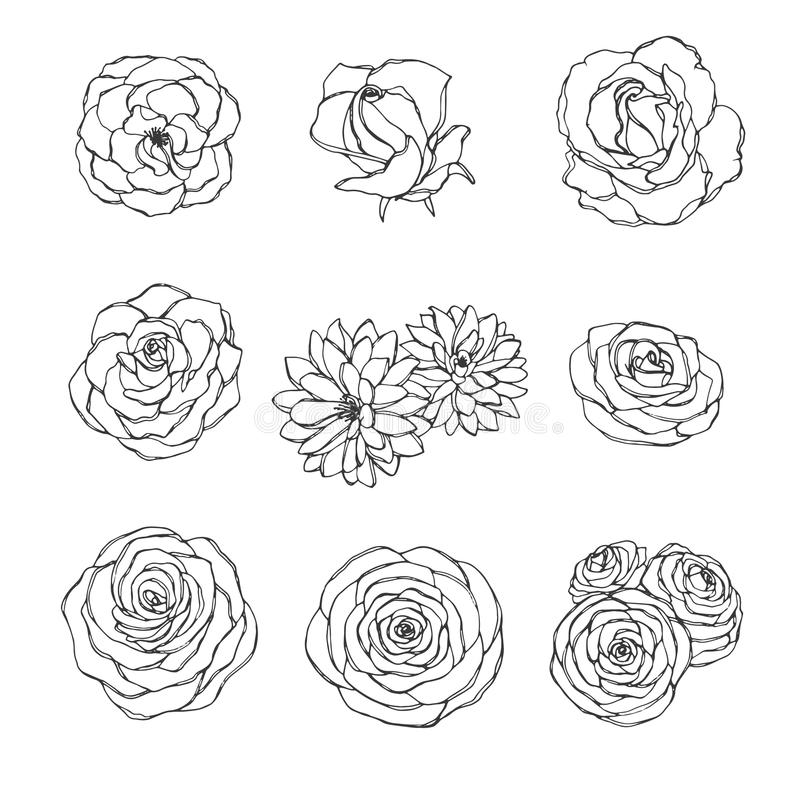 Drog uppsättningen för vektorn steg kamelia- pion- krysantemumhanden av, och blommaöversikten som isolerades på den vita bakgrund royaltyfri illustrationer