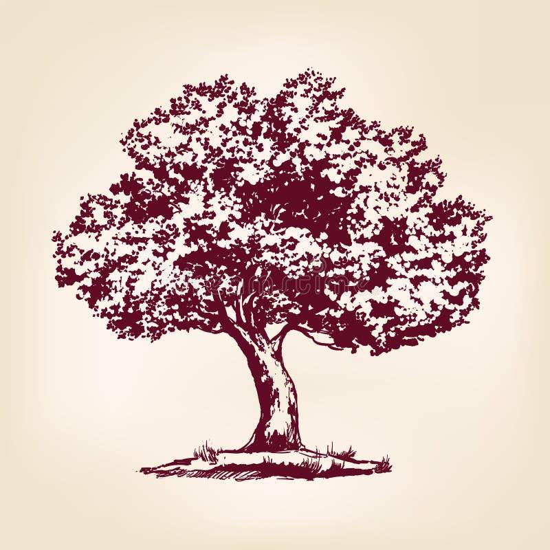 Drog vektorillustrationen för trädet skissar handen royaltyfri illustrationer