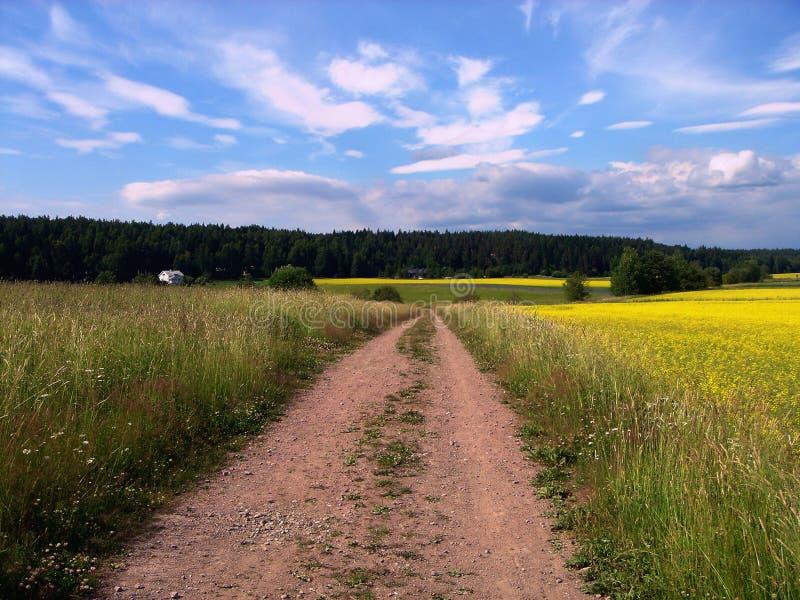 droga łąkowa obrazy stock