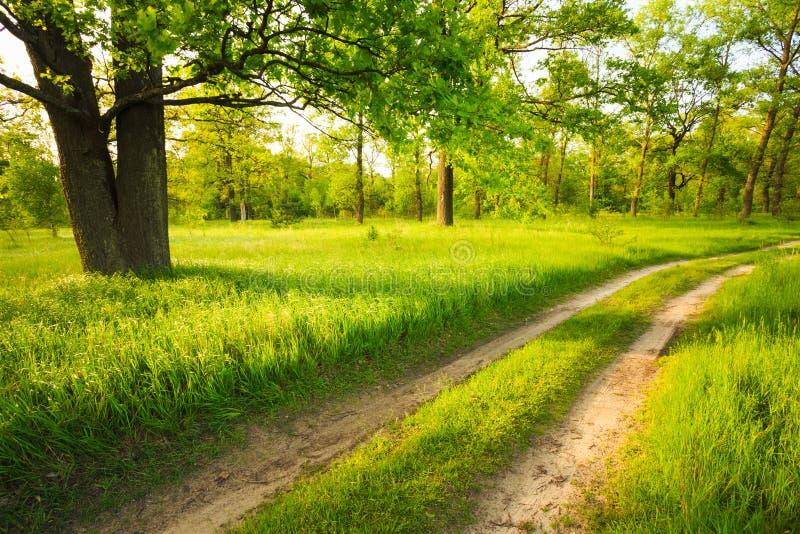 Droga, ścieżka, sposób, pas ruchu w lato zieleni lesie fotografia stock