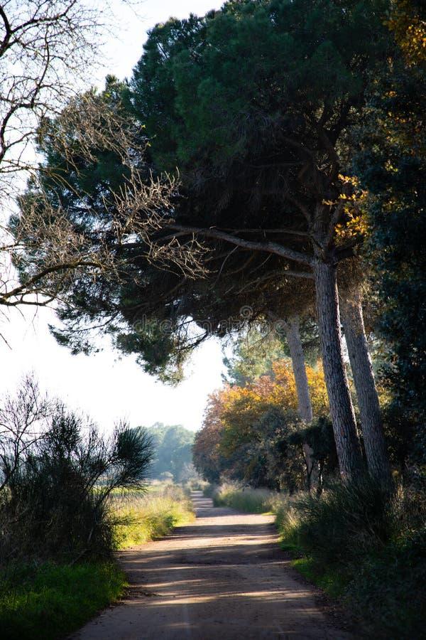 Droga ślad w drewnach na zima ranku zdjęcia royalty free