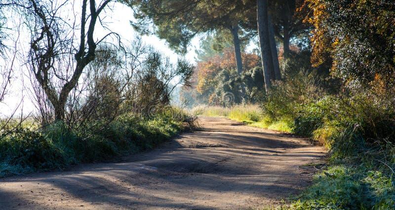 Droga ślad w drewnach na zima ranku zdjęcia stock