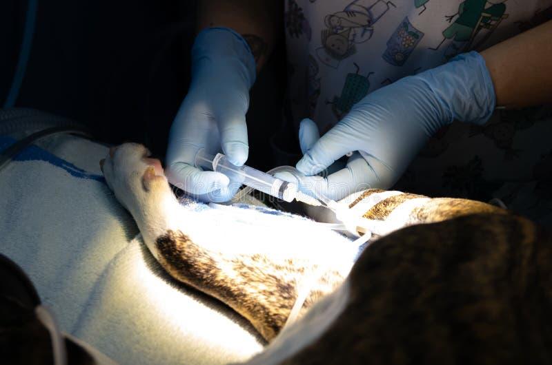 Droga anest?sica inyectada en un cat?ter intravenoso imagenes de archivo