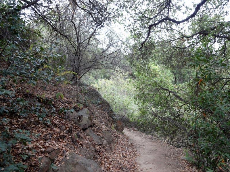 Droga brudna otoczona suchymi listwami i drzewami na wzgórzach fotografia royalty free