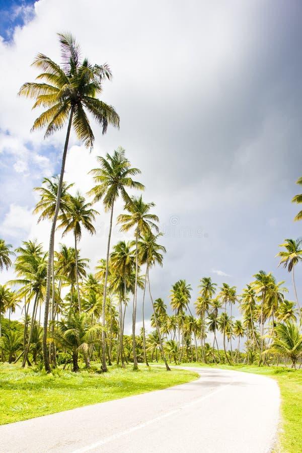 droga, Cocos Trzymać na dystans, Trinidad obrazy stock