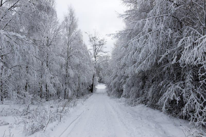 Droga gruntowa i śnieżni drzewa fotografia stock