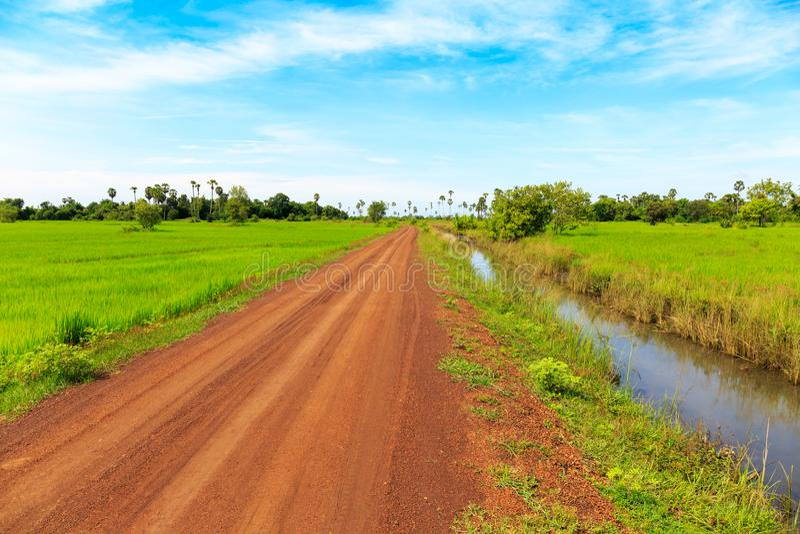 Droga Gruntowa i zieleni Ryżowi pola pod niebieskim niebem Robimy Prawdziwemu Beaut obraz royalty free