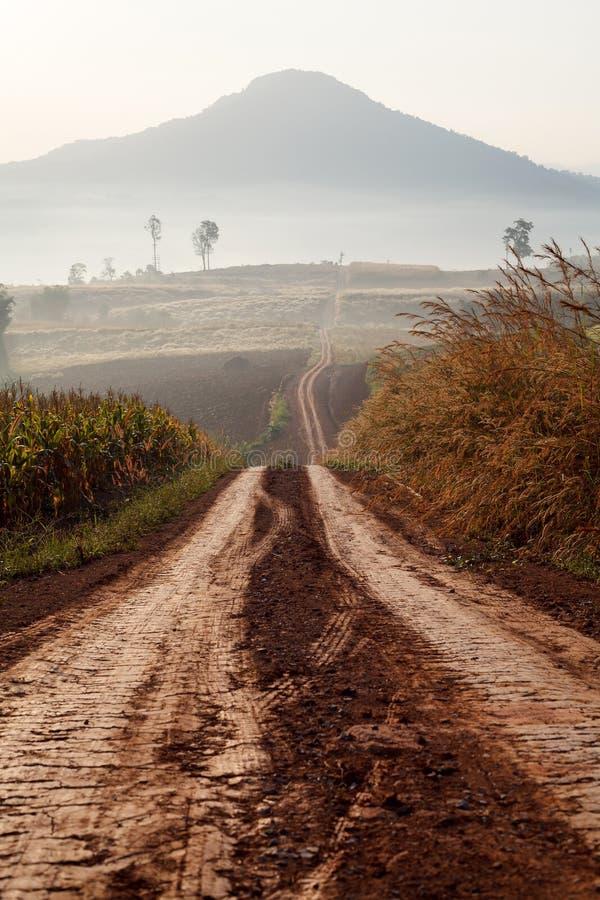 Droga gruntowa prowadzi przez wczesnego wiosna lasu na mgłowym obraz royalty free