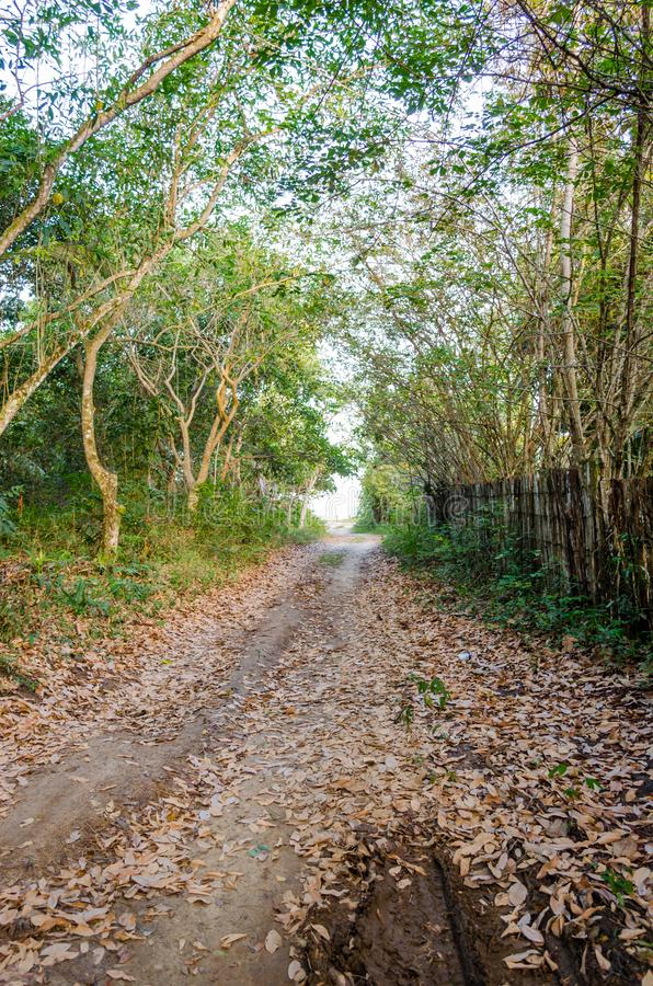 Droga gruntowa przychodzi plaża obok drzew i zielonej roślinności Drewniany ogrodzenie z drugiej strony fotografia royalty free