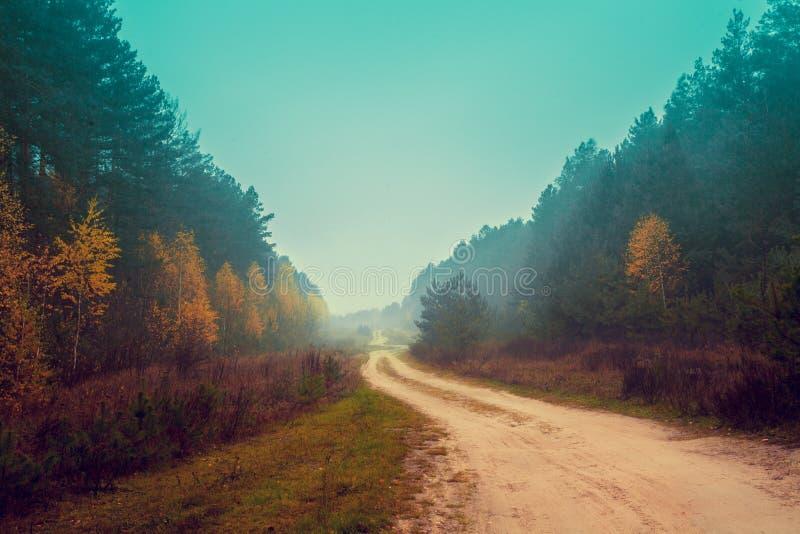 Droga gruntowa wśród lasu zdjęcie stock