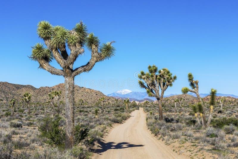 Droga Gruntowa w Joshua drzewa parku narodowym, Kalifornia obrazy stock