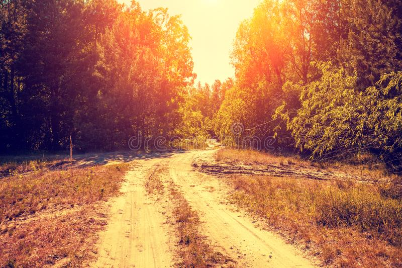 Droga gruntowa w lesie przy zmierzchem fotografia royalty free