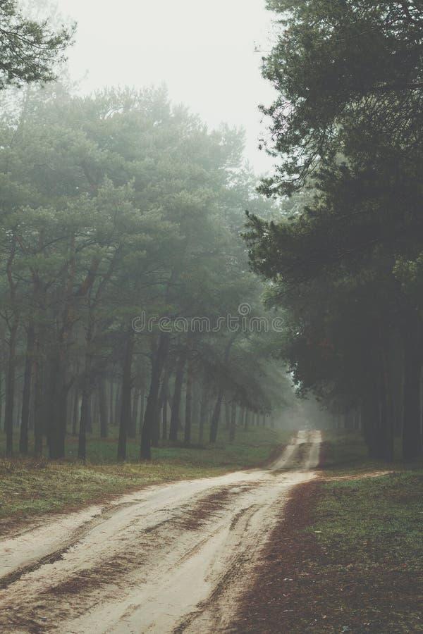 Droga gruntowa w ranku mgłowym lesie obraz stock