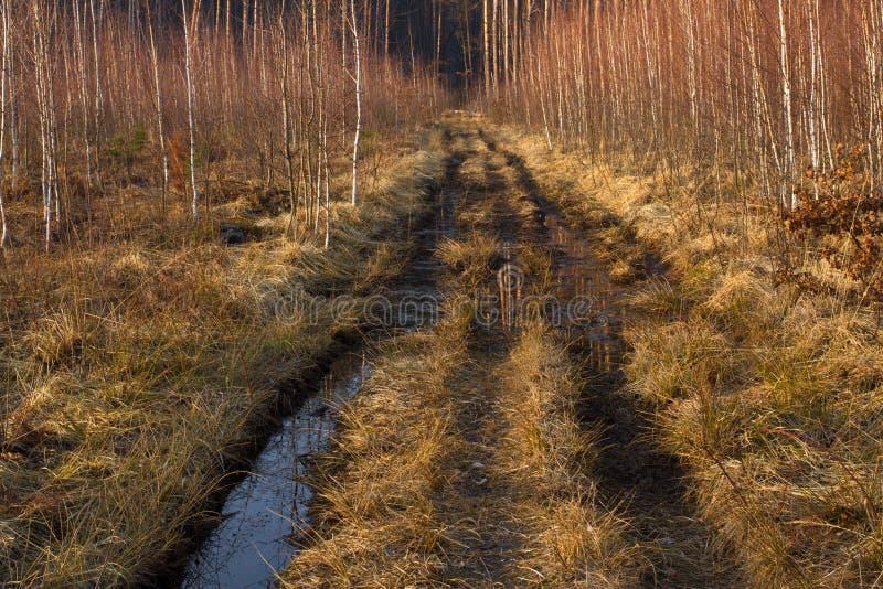 Droga gruntowa w sosny i brzozy lesie w Ukraina, Kijów Z drogi, skacze sucha trawa, wiosna zdjęcia stock