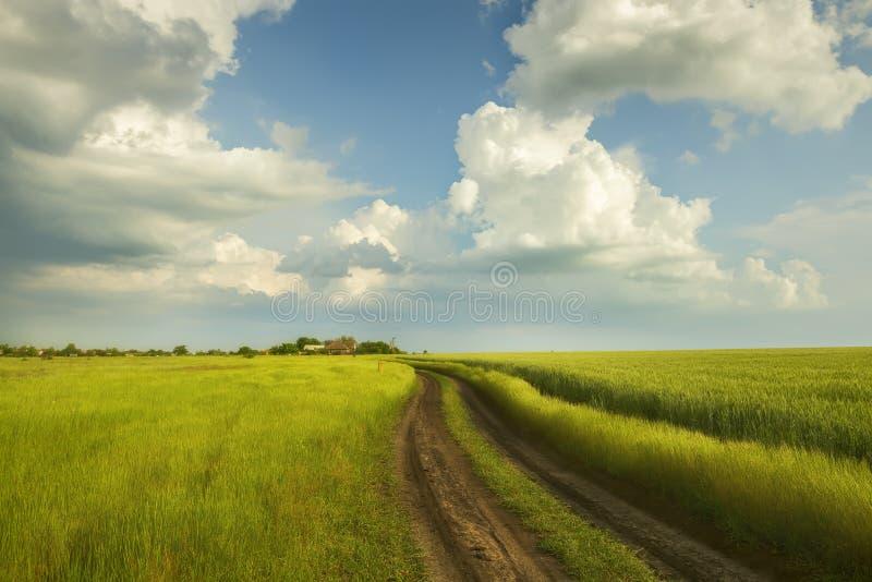 Droga gruntowa w zielonym polu banatka obraz royalty free
