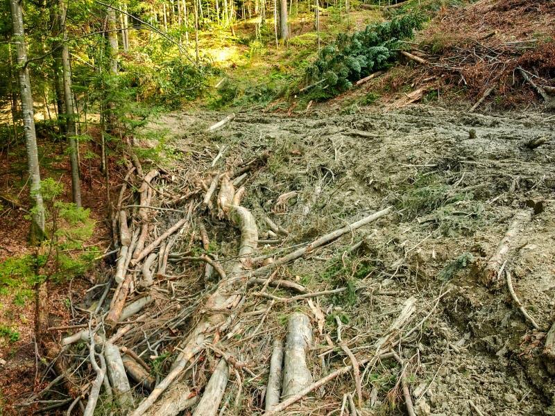 Droga gruntowa wyróbki miejsce śmiecący z drewnianymi gruzami zdjęcia stock