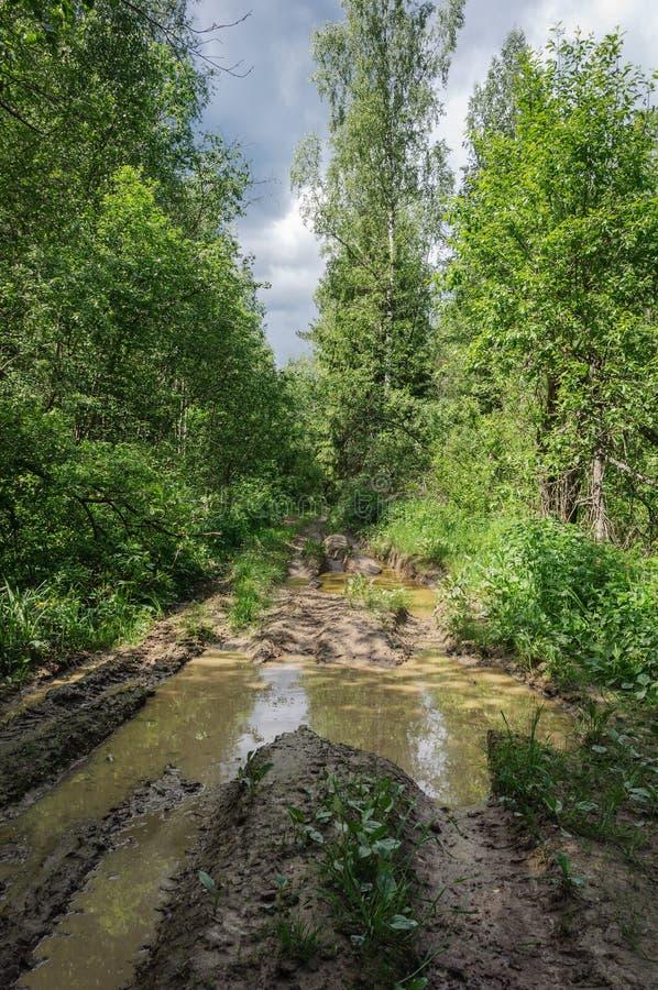 Droga gruntowa z dużymi kałużami w lesie fotografia stock