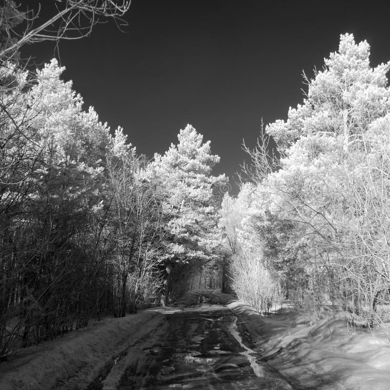 Droga gruntowa z kałużami w iglastej lasu IR fotografii obraz stock