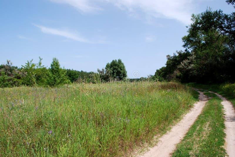Droga iść wokoło lasu zdjęcie royalty free