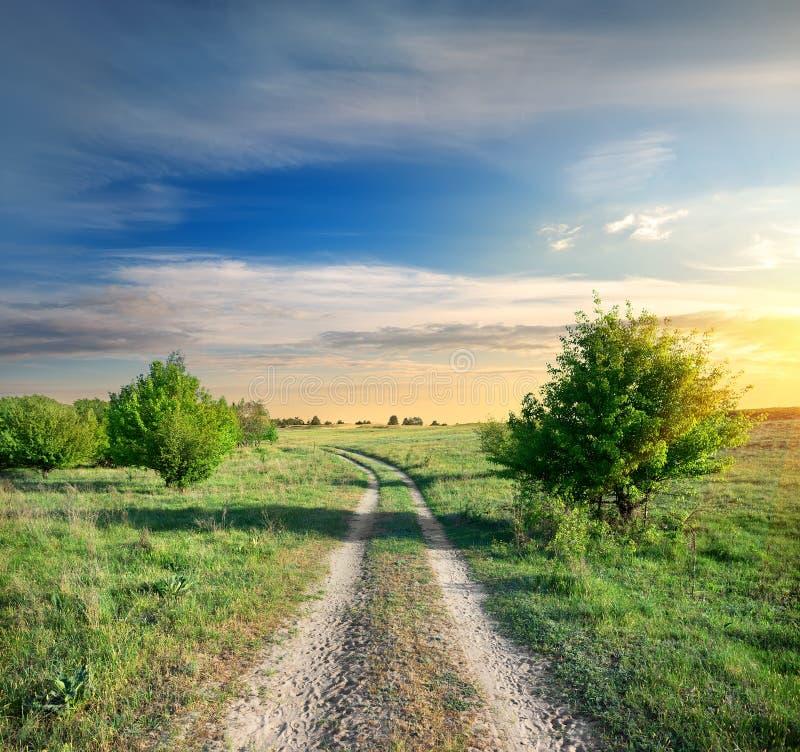 Droga i drzewa obrazy stock