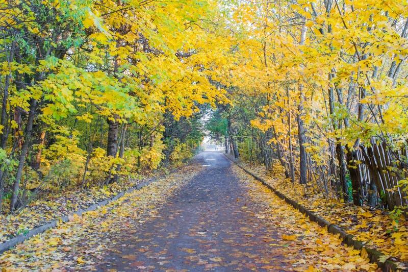 Droga jesieni jesieni lasowy las z wiejską drogą Kolorowy krajobraz z drzewami, wiejskimi drogami pomarańcze i czerwoni liście, fotografia stock