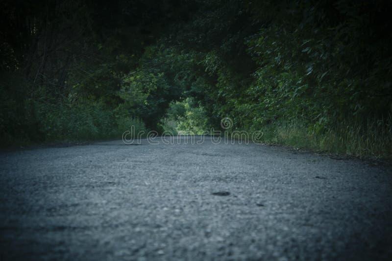 Droga jest osłonięta w tunelu zieleni obrazy royalty free