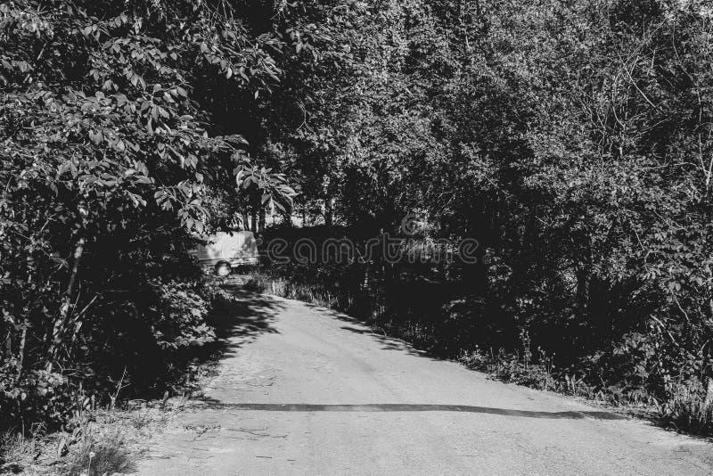 Droga krajowa przez gÄ™sty las Droga krajowa przez gÄ™sty las Czarno-biaÅ'y, natura, krajobraz, scena, drzewo, grunt, Å›cieżka, n zdjęcia royalty free