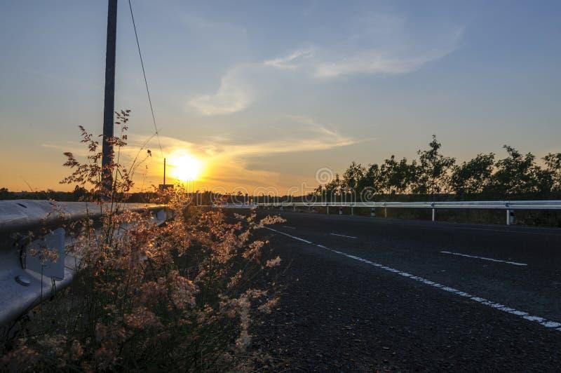 Droga, kwiaty i zmierzch, zdjęcie royalty free