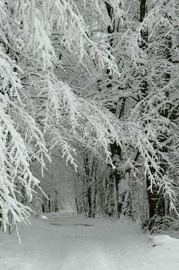 droga leśna śniegu zdjęcia royalty free