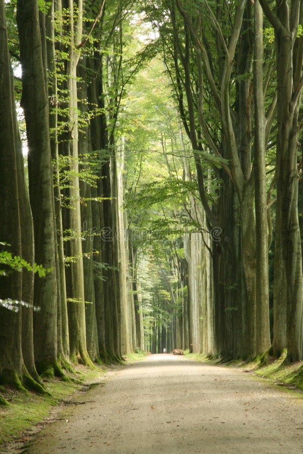 droga leśna zdjęcie stock