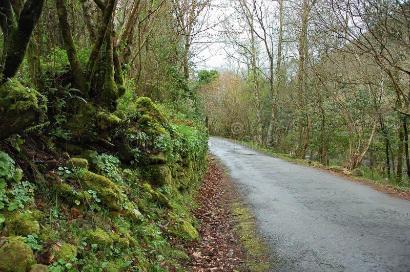 Download Droga leśna zdjęcie stock. Obraz złożonej z bada, ścieżka - 137326