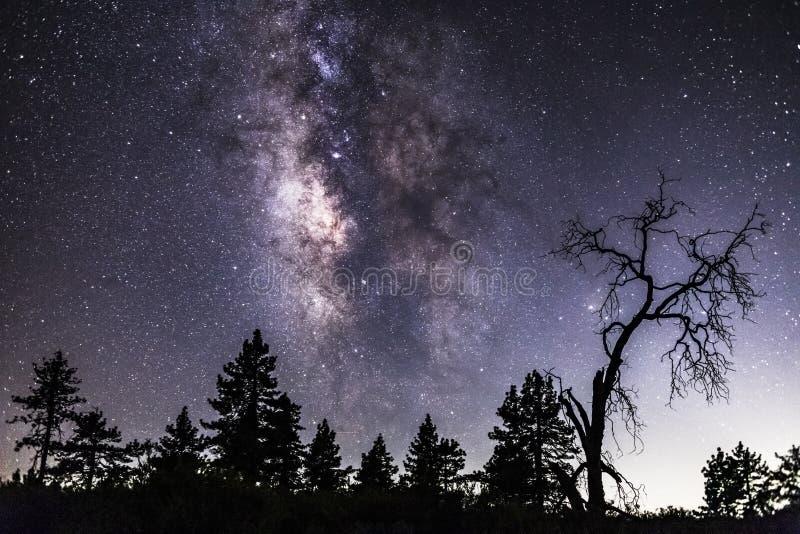 Droga Mleczna nad sosny i nieżywa drzewna sylwetka fotografia royalty free