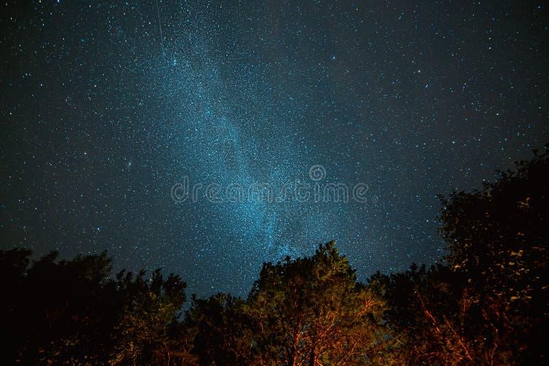 Droga Mleczna nocne niebo nad sosnami w Soodli, Estonia obrazy royalty free