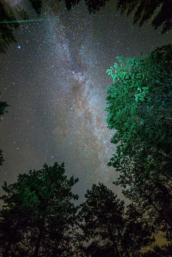 Droga Mleczna nocne niebo nad sosnami w Soodli, Estonia zdjęcia royalty free