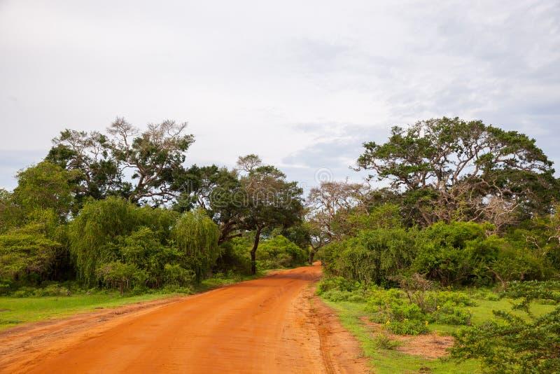 Droga na safari dżipie przy dżunglą w Sri Lanka zdjęcia stock