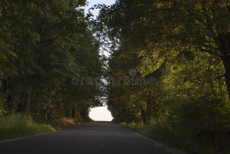 Droga niebo w drewnie z sunbeams zdjęcia stock