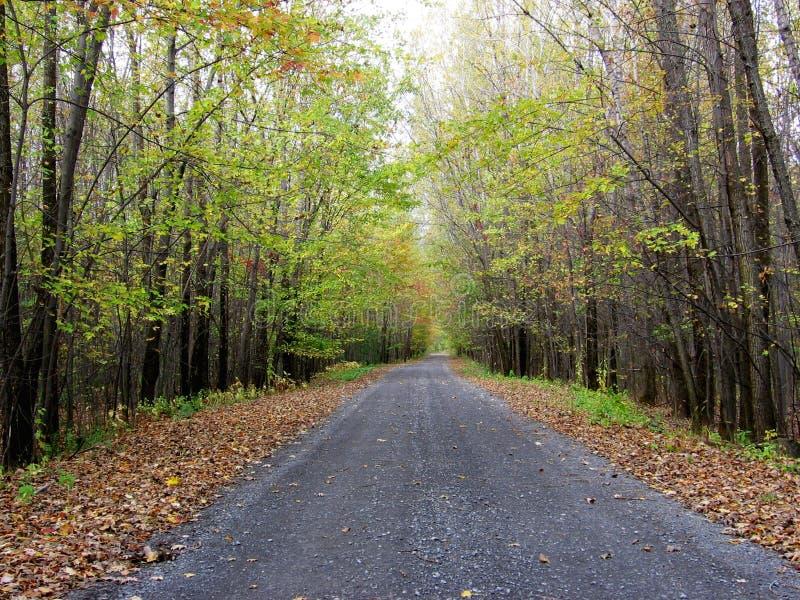 Droga po środku drewien podczas jesień sezonu z różnymi kolorami zapas fotografie obraz royalty free