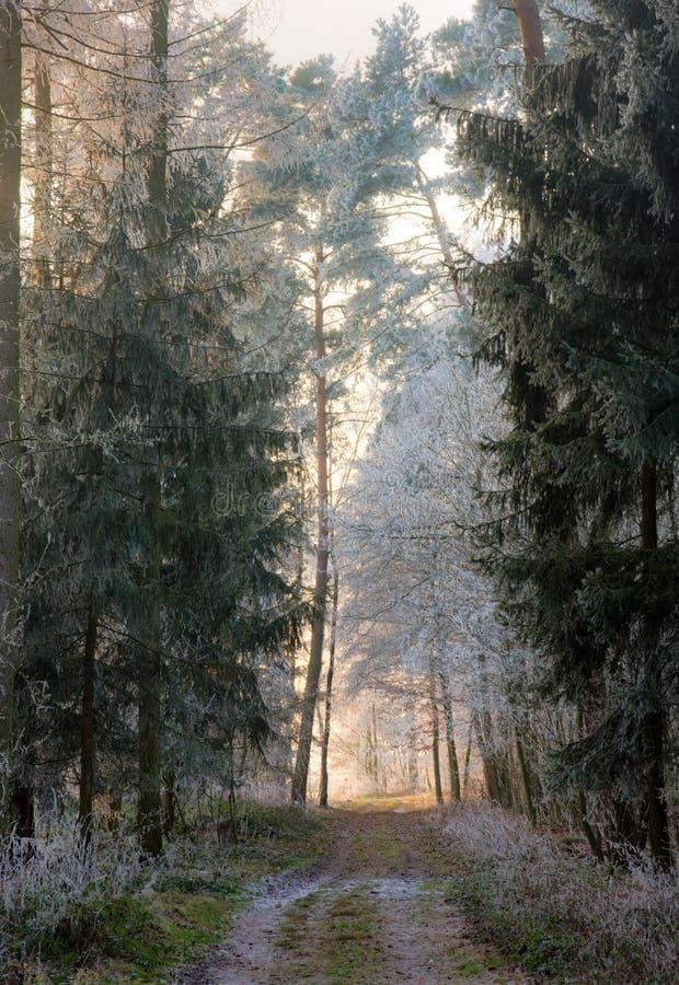 Droga polna przez lasu z frosted drzewami fotografia royalty free