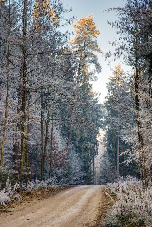 Droga polna przez lasu z frosted drzewami fotografia stock