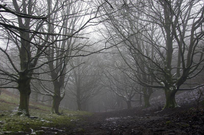 Droga przechodząca przez aleję drzew w zimnym, fantastycznym lesie z plamami śniegu W mglistym, ponurym dniu zimy obrazy royalty free