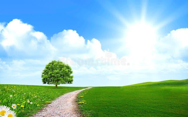 Download Droga Przemian Blisko Drzewa W Zielonym Polu Ilustracji - Ilustracja złożonej z jaskrawy, chmura: 28971052