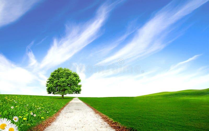 Download Droga Przemian Blisko Drzewa W Zielonym Polu Ilustracji - Ilustracja złożonej z paśnik, łąka: 28971066