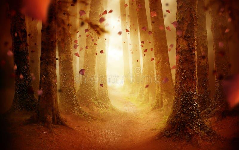 Droga przemian Przez jesień lasu zdjęcia royalty free