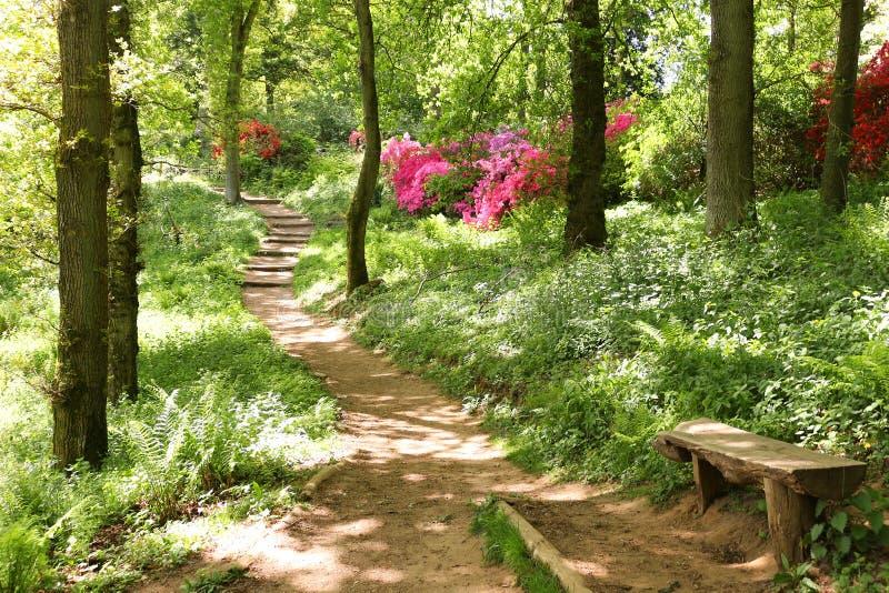 Download Droga przemian przez lasu obraz stock. Obraz złożonej z piękny - 106907981