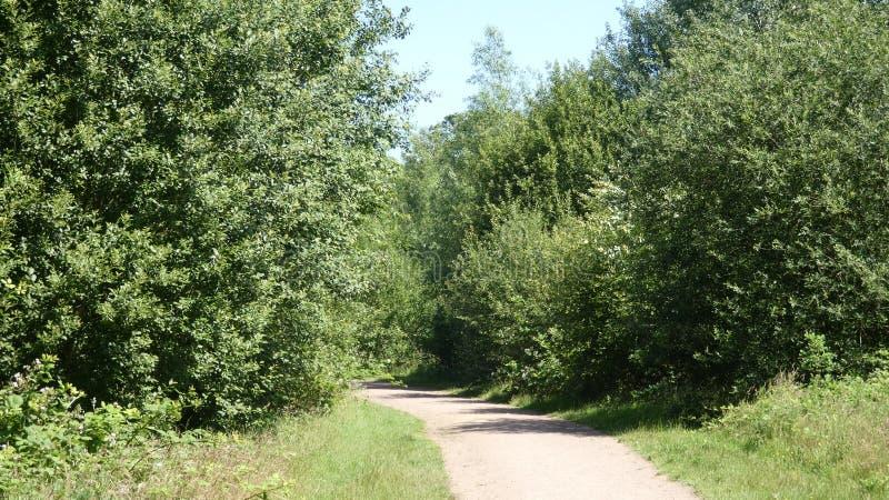Droga przemian przez lasu w nowych horyzonty obrazy stock
