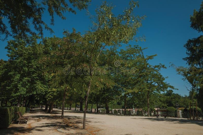 Droga przemian wśród prążkowanych zielonych drzew w parku Madryt fotografia stock