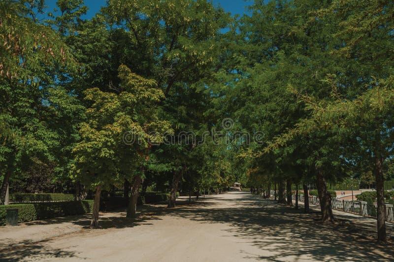 Droga przemian wśród prążkowanych zielonych drzew w parku Madryt zdjęcie royalty free