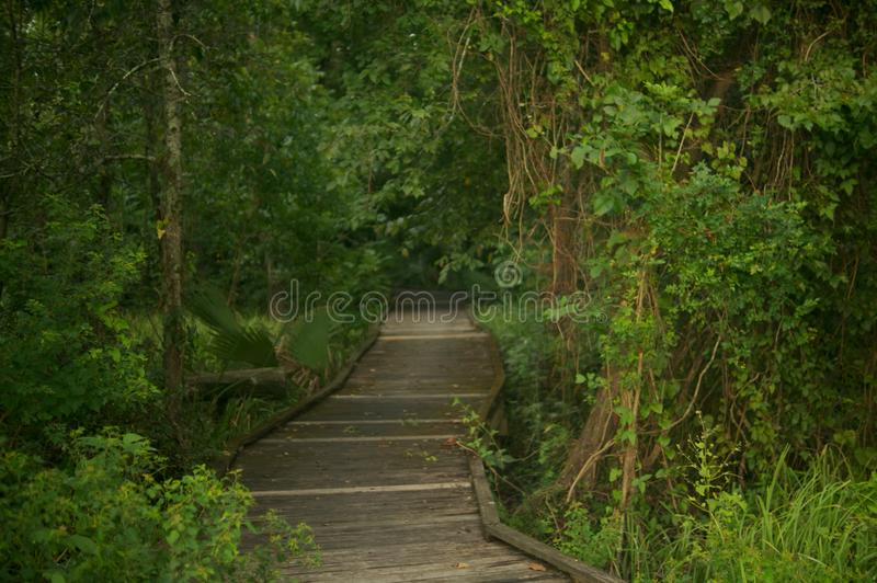 Droga przemian w dżungli zdjęcie royalty free